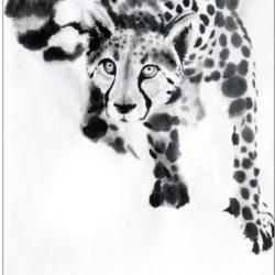 Gepard-Grußkarten