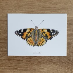 """Postcard butterfly """"Thistle..."""