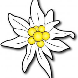 Adesivo sticker Edelweiss